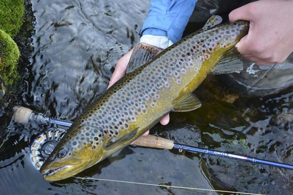browntrout-orvis-flyfishing