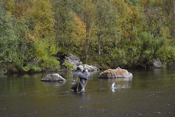 grayling-flyfishing-river-alta