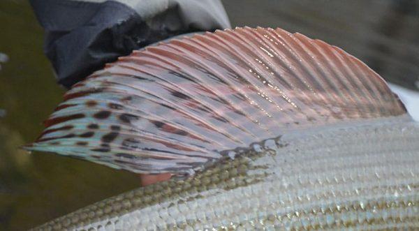 stallingefiskeri-norge