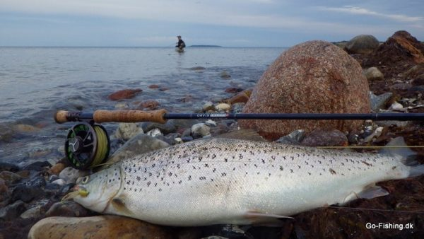 Seatrout open Go-Fishing