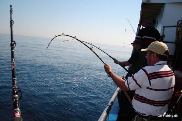 Go-Fishing på Det Gule Rev