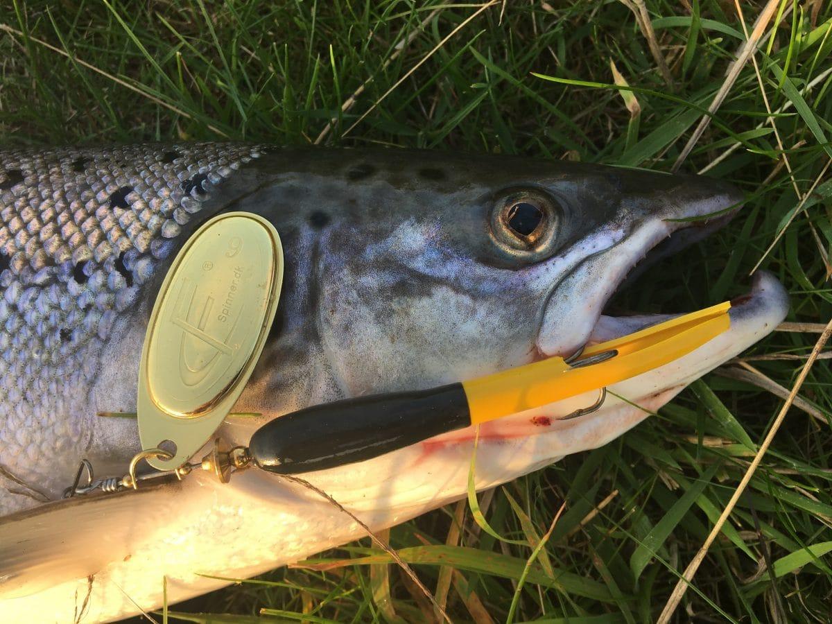 https://www.go-fishing.dk/produkt/fc-spinner-til-laks-havoerreder/