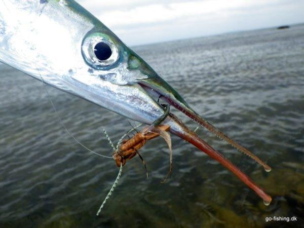 Hornfisk og skumfluer